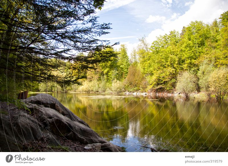 Nature Green Tree Landscape Environment Spring Natural Beautiful weather Pond Nature reserve