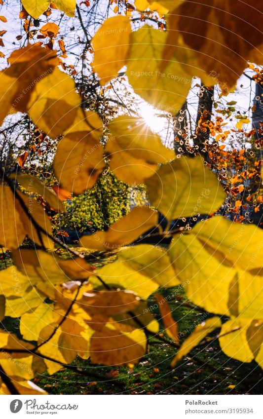 #S# Autumn yellow II Environment Nature Landscape Plant Happy Leaf Leaf canopy Tree Seasons Autumn leaves Autumnal Autumnal landscape Sun To go for a walk