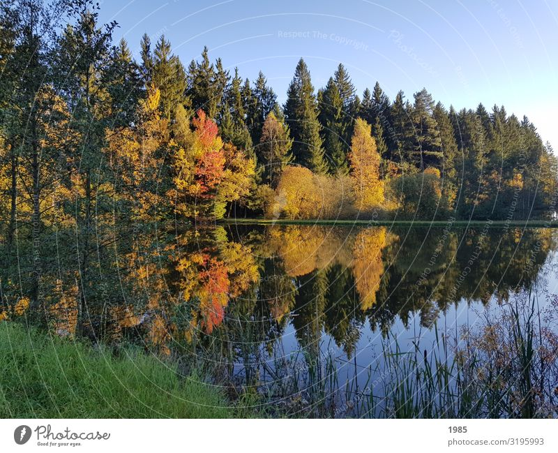 lake reflection Nature Landscape Plant Water Cloudless sky Autumn Beautiful weather Tree Grass Bushes Forest Lakeside Infinity Contentment Enthusiasm Calm