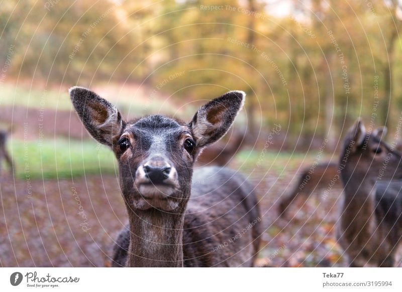 Hello, Deer. Nature Animal Wild animal 1 Esthetic Roe deer Colour photo Exterior shot Twilight