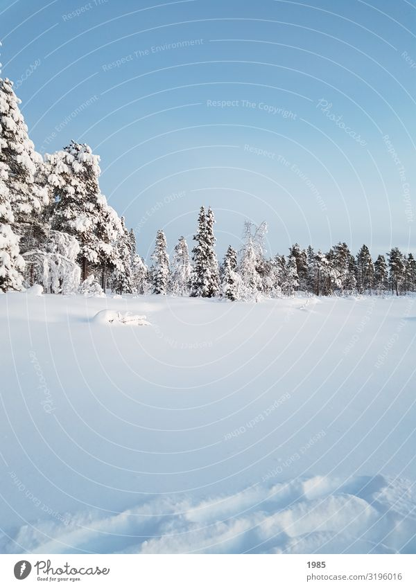 winter wonderland Winter Snow Winter vacation Hiking Nature Landscape Sky Cloudless sky Ice Frost Tree Freeze Glittering Looking Infinity Cold Natural Blue
