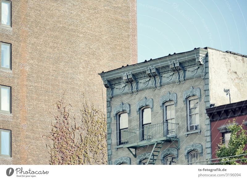 Tell me about the old days. Sky Cloudless sky Plant Tree Ivy Creeper New York City Town Downtown Old town Deserted House (Residential Structure) High-rise