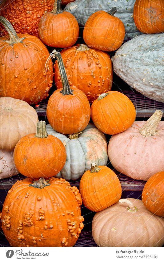 Mass panic before Halloween Food Vegetable Pumpkin Pumpkin time Pumpkin plants Nutrition Eating Feasts & Celebrations Hallowe'en Market stall Markets