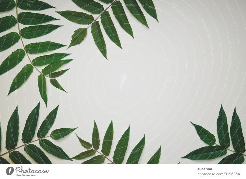 leafy framed Leaf Twig Frame Copy Space middle Neutral Background flatlay Green White Plant Nature Natural Fresh Spring Growth Decoration map