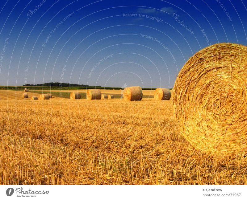 Autumn Field Agriculture Harvest Lower Saxony Bale of straw