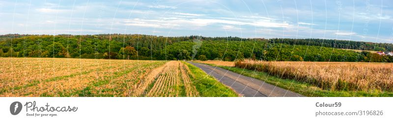 Central Hessian Landscape Summer Agriculture Forestry Nature Beautiful weather Field To enjoy Yellow Contentment Relaxation Europe Background picture panorama