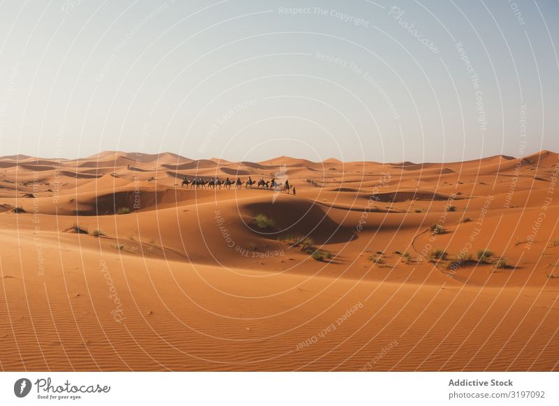 Silhouette of travelers on camels in sunset Camel Desert Caravan Sunset Dune Morocco Vacation & Travel Sand Trip Nature Heat minimalist Horizon Line Dark Gold