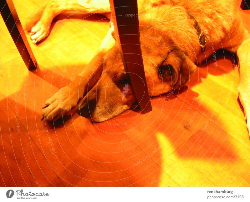 dogy Dog