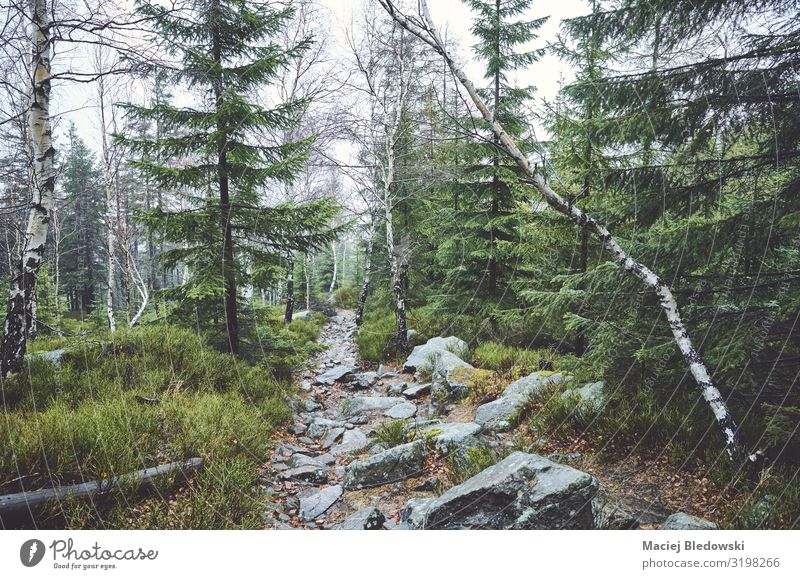 Path in a mountain forest on a rainy day Vacation & Travel Tourism Trip Adventure Expedition Camping Mountain Hiking Environment Nature Landscape Plant Clouds