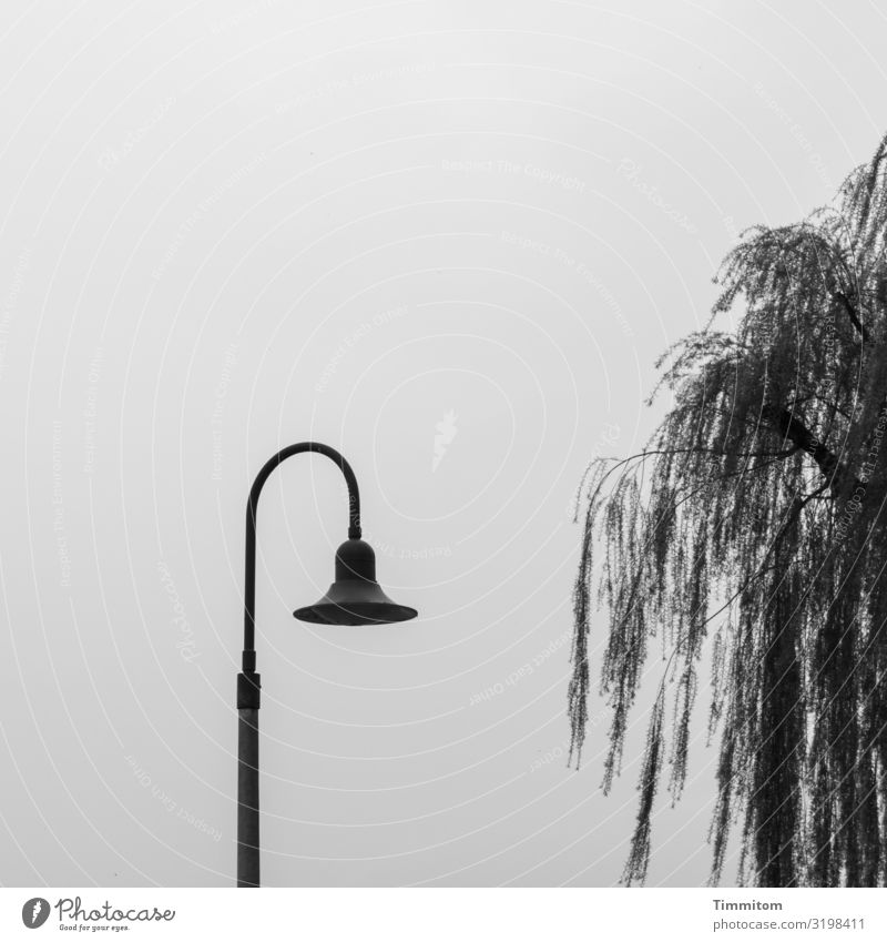 Vacation & Travel Nature Blue Tree Black Environment Lamp Lake Gray Metal Esthetic Stand Wait Lake Constance