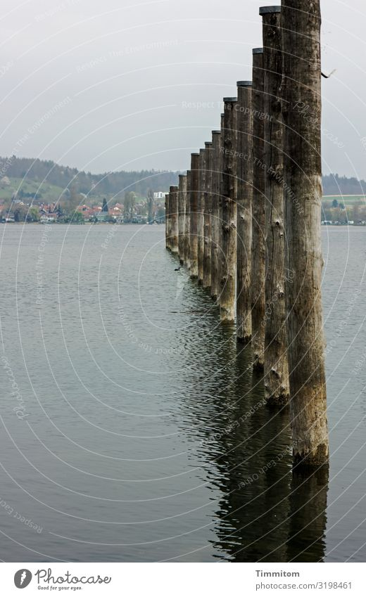 Vacation & Travel Nature Blue Water Landscape Black Wood Environment Natural Lake Brown Gray Hill Pole Lake Constance