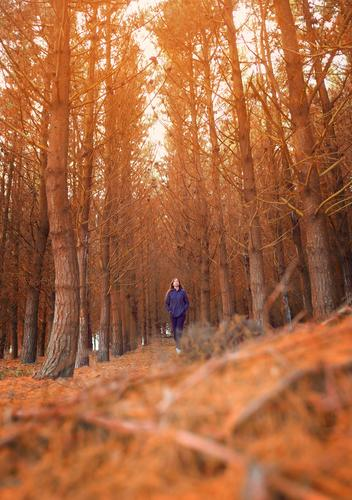 Young woman taking a walk on a forest in Autumn Woman Human being Vacation & Travel Nature Youth (Young adults) Landscape Red Sun Tree Loneliness Leaf Forest