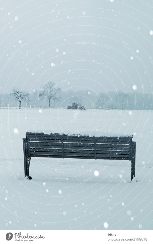 Nature Landscape Winter Environment Cold Snow Snowfall Ice Weather Climate Frost Bench Seating Climate change Bad weather