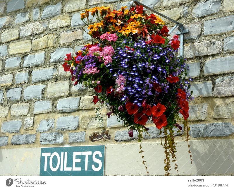 cute toilets... Flower House (Residential Structure) Wall (barrier) Wall (building) Characters Signs and labeling Signage Warning sign Hang Esthetic