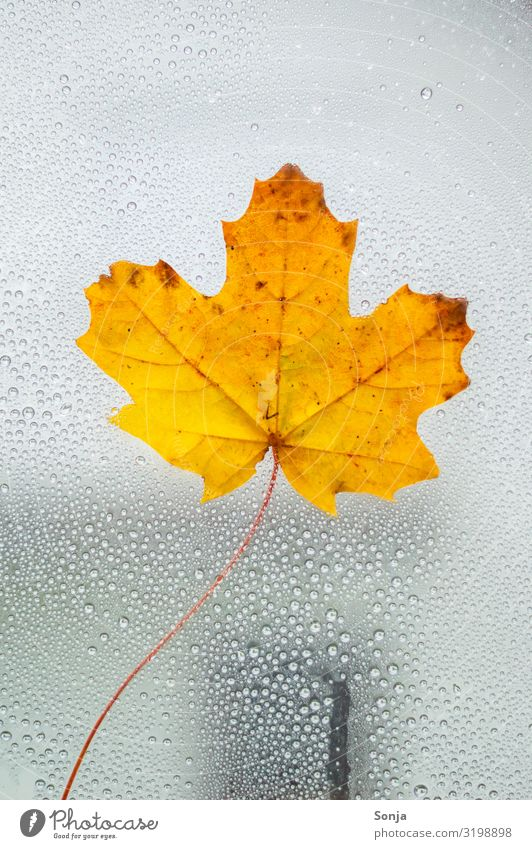 Window pane with yellow leaf and raindrops Lifestyle Drops of water Autumn Winter Climate change Bad weather Rain Leaf Dark Wet Natural Emotions Loneliness