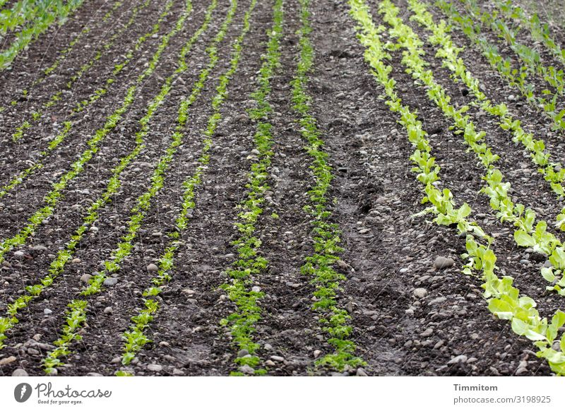 Nature Plant Green Black Food Environment Natural Nutrition Field Earth Growth Vegetable Agriculture Lettuce Salad Vegetable farming