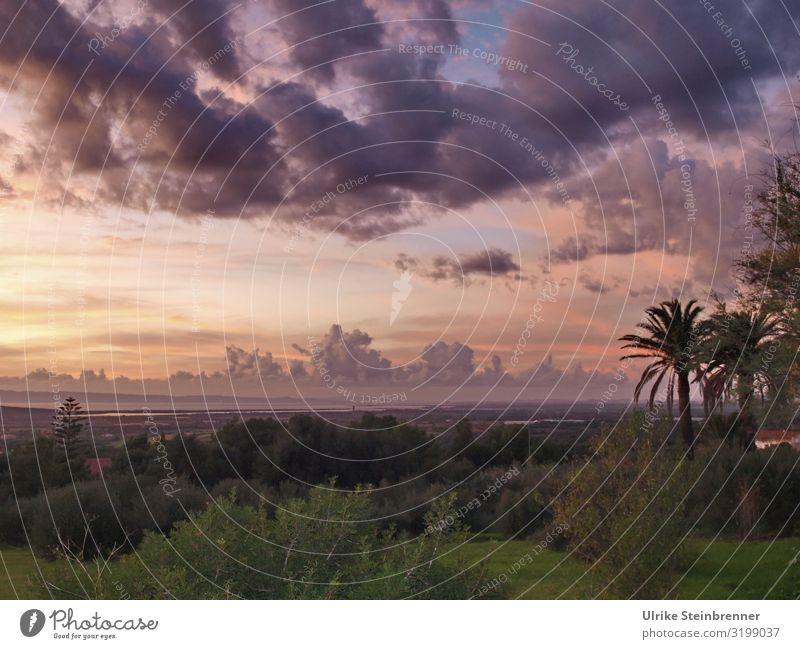 900 | Cloudy sky with sunset over Sardinian landscape Landscape palms evening mood Sunset Clouds Clouds in the sky atmospheric Nature Twilight Calm Sky Evening