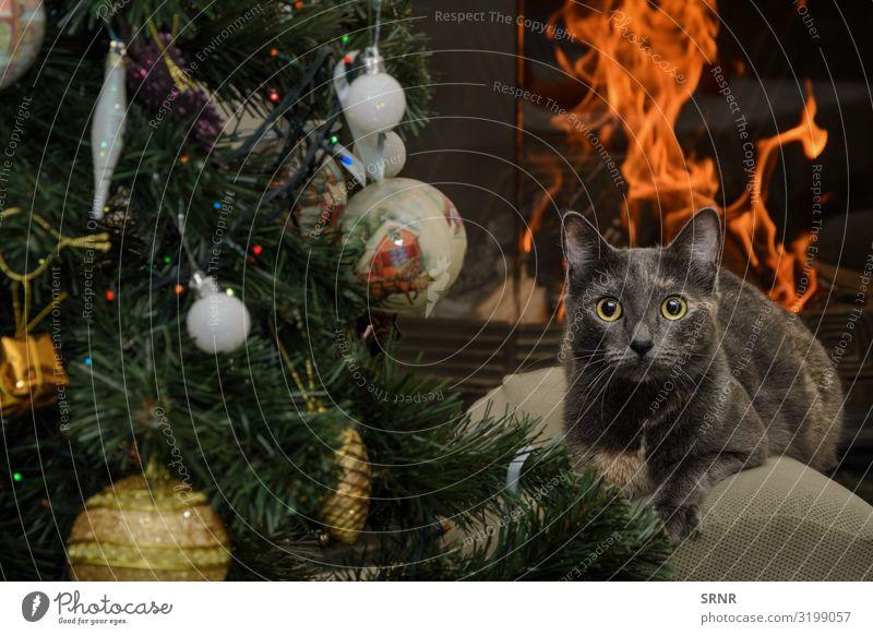 Cat Christmas & Advent New Year's Eve Animal Short-haired Pet Cute Blaze burn carnivorous chimney-corner Christmas decorations Christmas tree Domestic