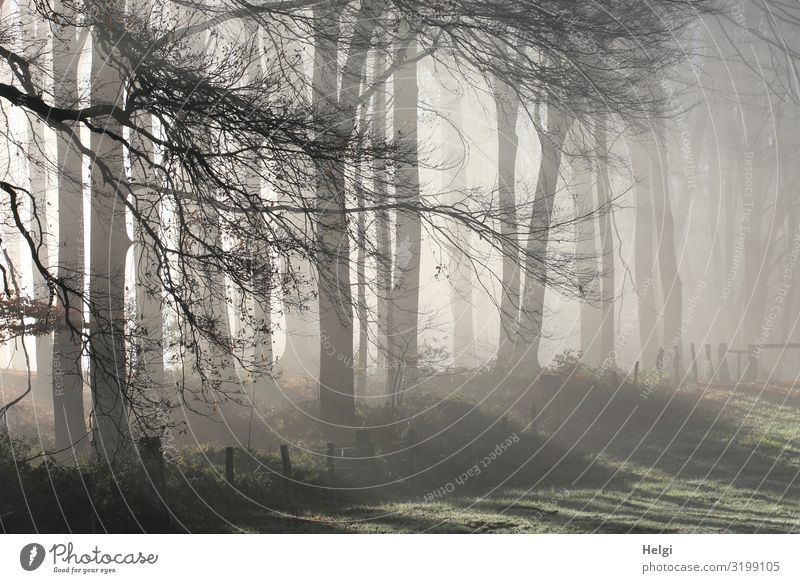 foggy November morning at the edge of the wall with sunrays Environment Nature Landscape Plant Autumn Fog Tree Grass Twigs and branches Meadow Forest