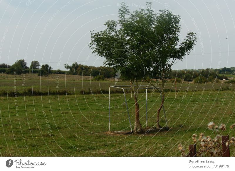 Toor! Nature Summer Meadow Field France Deserted Reconquest by nature Whimsical Soccer Goal Colour photo Exterior shot Deep depth of field