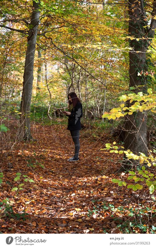 no reception Young woman Youth (Young adults) 1 Human being Environment Nature Landscape Autumn Beautiful weather Leaf Deciduous forest Autumn leaves Autumnal