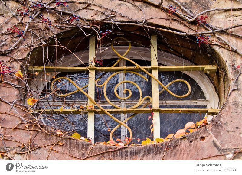 An old, decorated oval window overgrown with grapevines Nature Wild plant Building Wall (barrier) Wall (building) Facade Window Old Observe Hang Sadness Faded