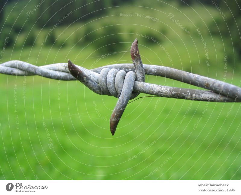 barbed wire Barbed wire Fence Wire Things Green Meadow Border Metal Detail Point Rust