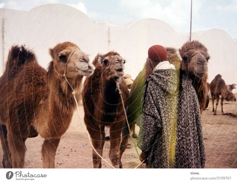 Human being Vacation & Travel Man Animal Adults Building Tourism Together Sand Trip Masculine Communicate Stand Beautiful weather Wait Manmade structures