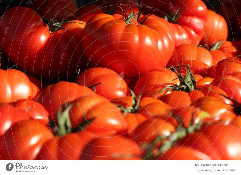 tomatoes Food Vegetable Fruit Nutrition Organic produce Vegetarian diet Fresh Healthy Glittering Round Juicy Clean Green Red Diet Vegan diet Tomato Colour photo