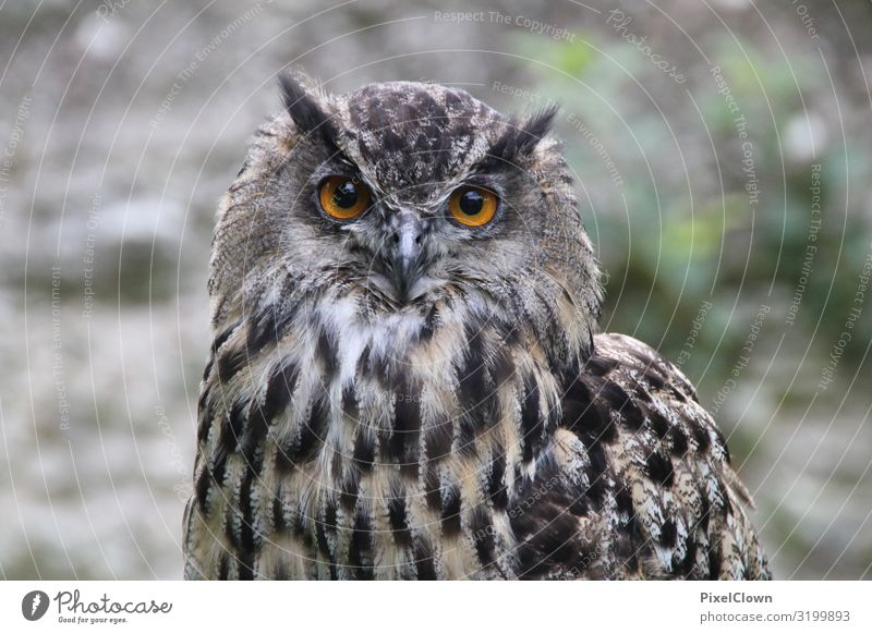 Glowing Eyes Exotic Nature Animal Bird Zoo 1 Flying Looking Authentic Beautiful Brown Moody Colour photo Exterior shot Close-up Detail Day