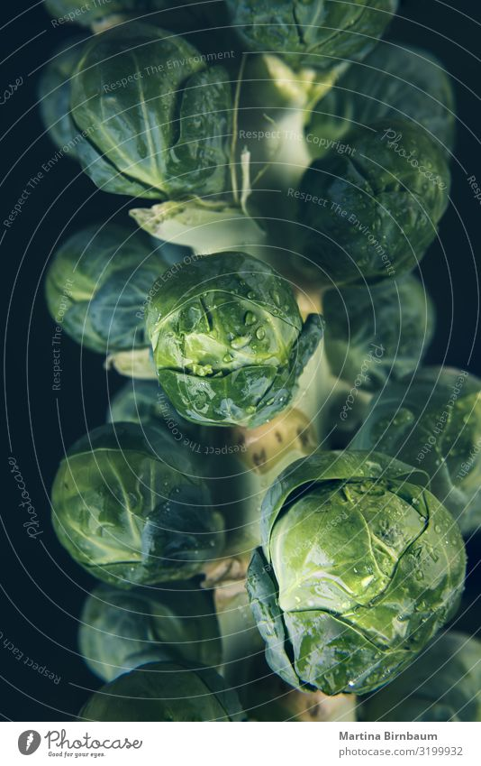 Macro of a fresh, wet and green brussel sprout stalk Vegetable Fruit Nutrition Winter Garden Group Nature Plant Leaf Drop Growth Fresh Natural Green White Stalk