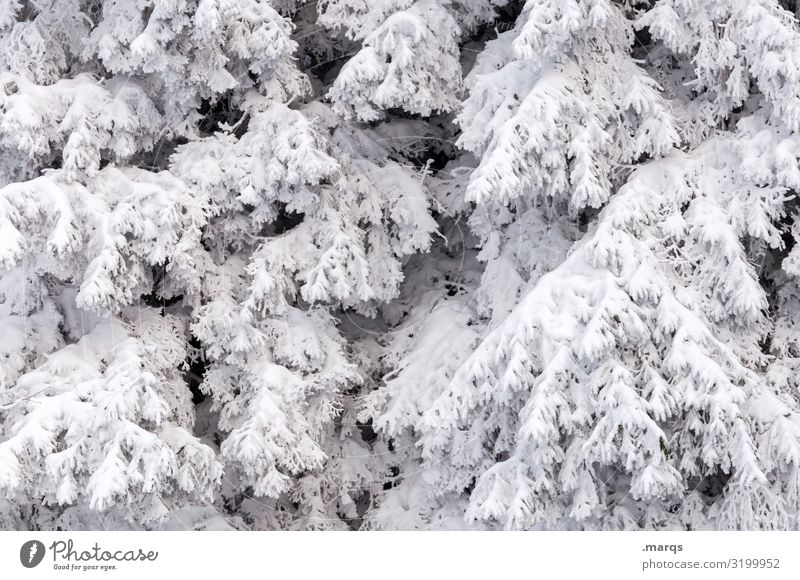 fresh snow Christmas & Advent Environment Nature Winter Snow Branch Coniferous trees Cold White Covered Colour photo Exterior shot Structures and shapes