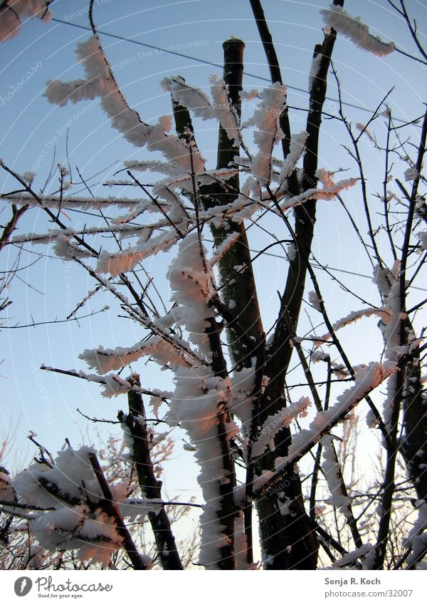 Father Frost II Winter Cold Tree Bushes Ice Branch Twig