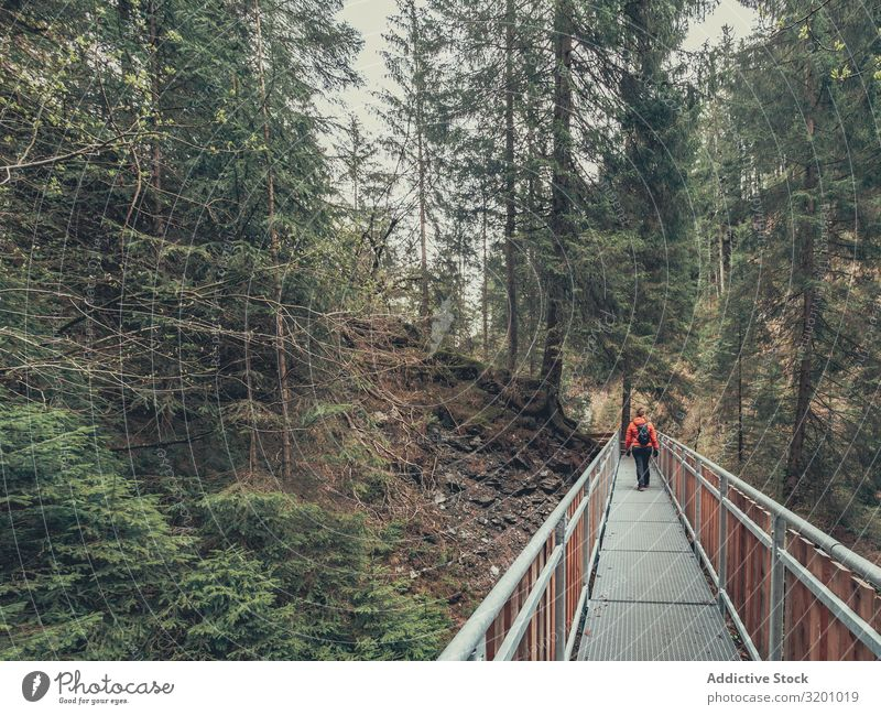 Traveller admiring picturesque view of mountain forest traveller Forest Mountain Picturesque Vantage point Tourist Hiking Beautiful Lanes & trails Alps