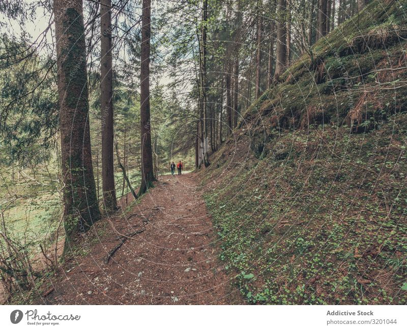 Tourists walking on path among beautiful forest Walking Forest Lanes & trails Beautiful hiker admiring Vantage point Wild Area Alps Dolomites Italy Picturesque