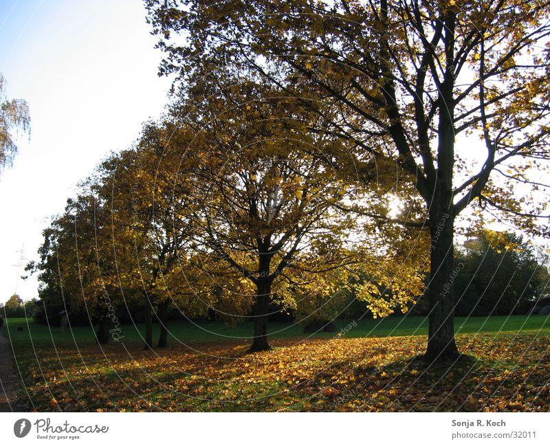 Golden Autumn Tree Leaf Multicoloured Sun Shadow