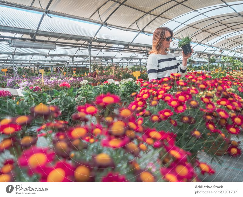 Female studying flowers in greenhouse Woman Flower Greenhouse Markets Plant Gardener choosing Cultivation Adults Human being hunkers Squat Study Hold Customer