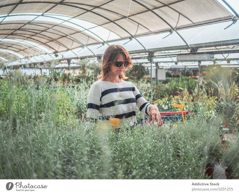 Thoughtful female choosing flowers on market Woman Greenhouse Plant Gardening Customer Houseplant Adults Human being Considerate Pensive Stand smelling Looking