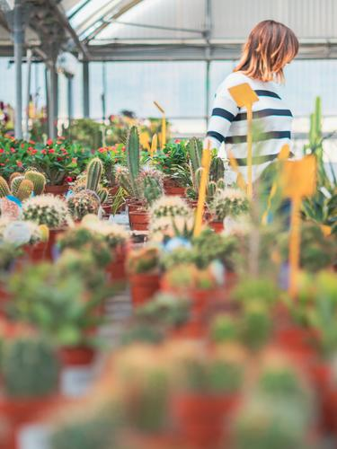 Female customer choosing flowers in greenhouse Woman Greenhouse Flower Cart Shopping Plant Blooming Gardening Adults Human being Stand Putt Customer Beautiful