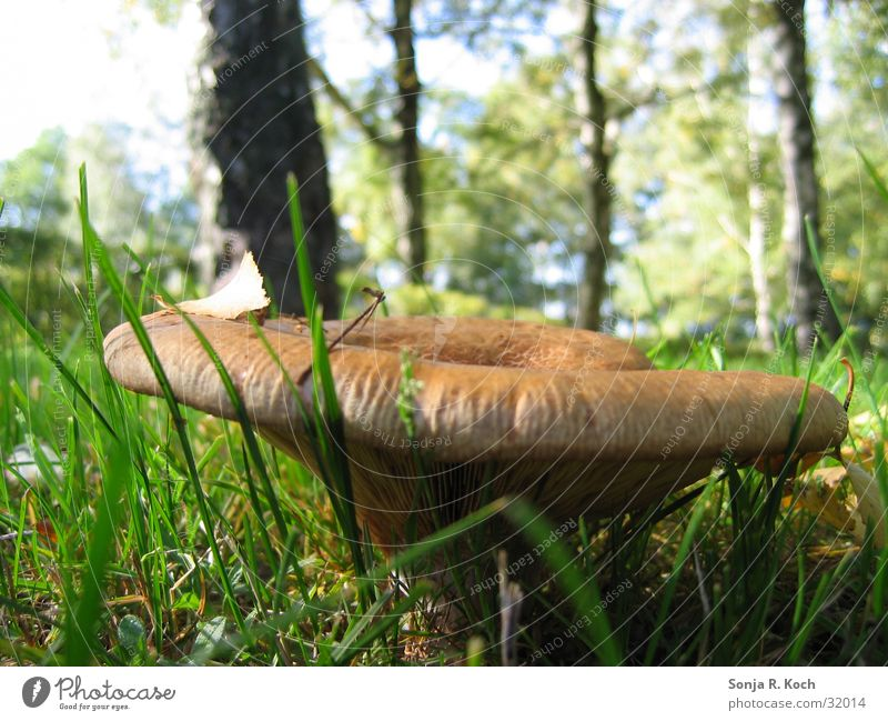 Forest Autumn Meadow Mushroom