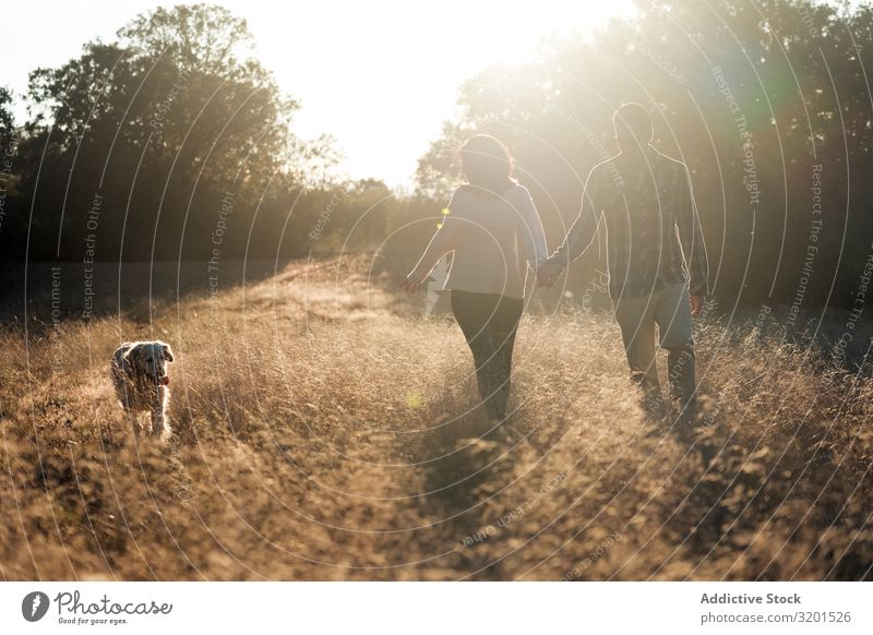 Couple with dog in countryside at sunset Landscape Sunset Dog Field To go for a walk Harmonious Together Domestic Gold Rural Relationship romantic Countries
