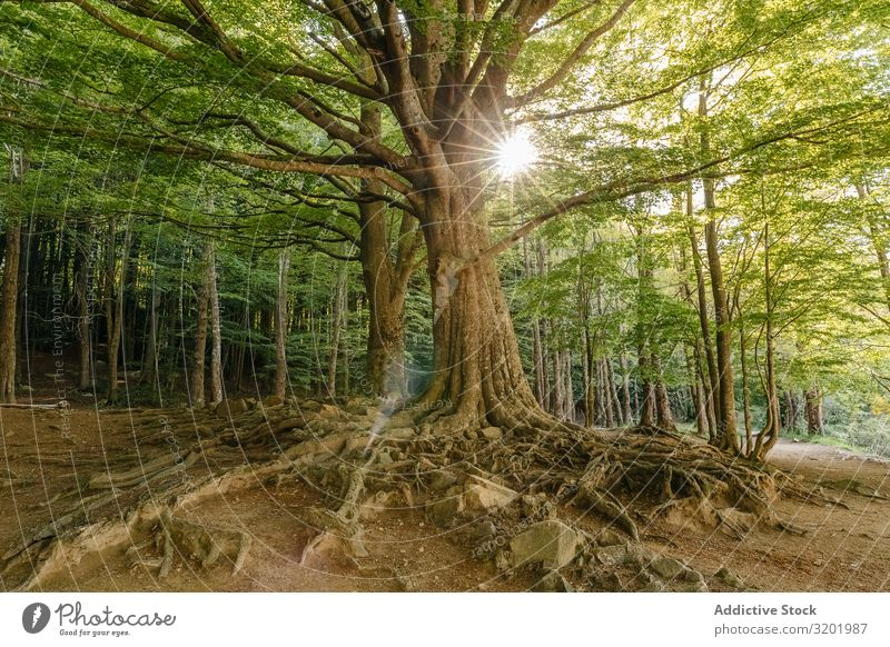 Tree in the middle of the forest Forest Nature Landscape Green Vacation & Travel Beautiful Park Plant Environment Grass trekking Hiking Sunlight Sunbeam Seasons