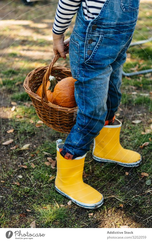 Child in denim overalls collecting pumpkins in yard Pumpkin picking Orange enjoying Nature Organic Cute Harvest Beautiful Mature Infancy Leisure and hobbies