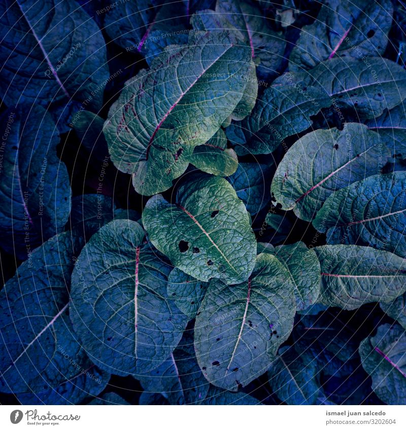 green and blue plant leaves in the nature in autumn Plant Leaf Blue Green Colour Multicoloured Garden Floral Nature Natural Decoration Abstract Consistency