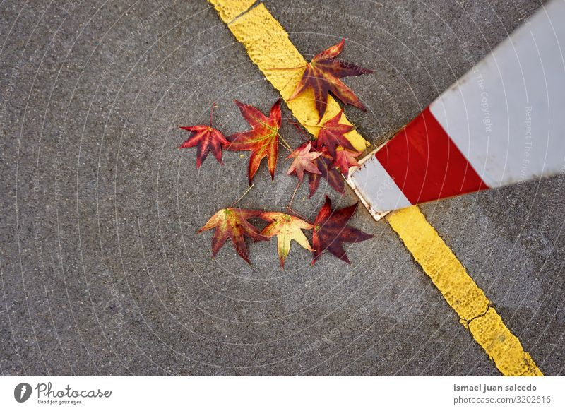 red leaf with autumn colors on the soccer field Leaf Red Loneliness Isolated (Position) Ground Nature Natural Exterior shot Neutral Background Consistency