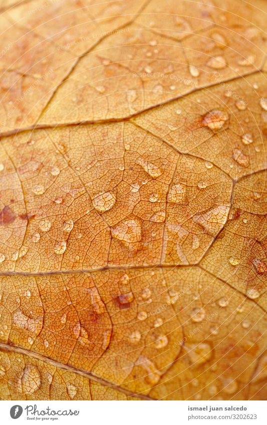 raindrops on the brown leaf in autumn Leaf Brown Rain Drop Water Wet Bright Glittering Loneliness Isolated (Position) Ground Nature Natural Exterior shot