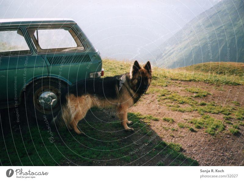 The Guardian Dog Mountain Level Car mountain trail German Shepherd Dog