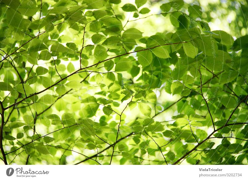 Nature Summer Green Tree Relaxation Leaf Calm Forest Healthy Environment Spring Garden Park Fresh Growth Energy industry