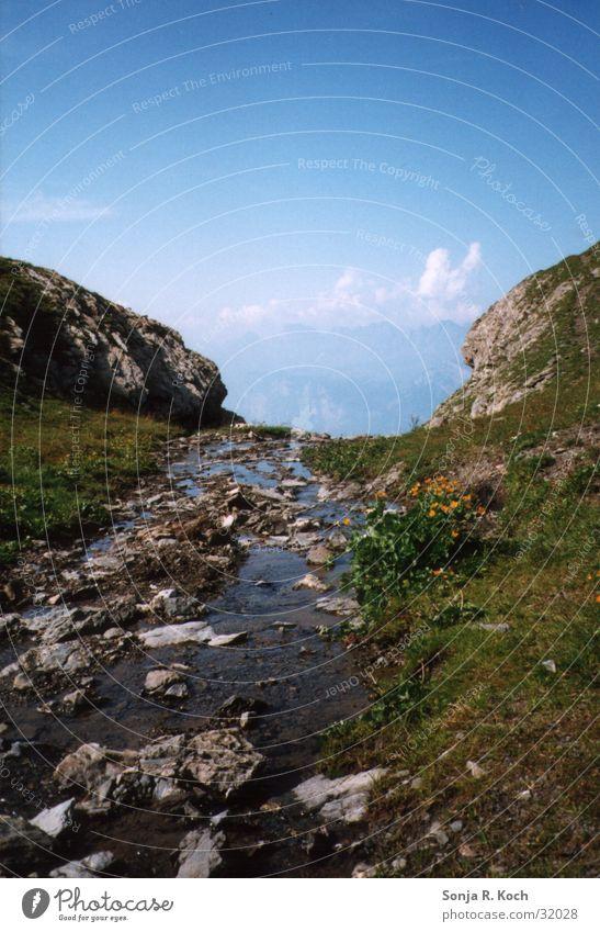 mountain stream Brook Refreshment Summer Green Refrigeration Wet Mountain Water Stone