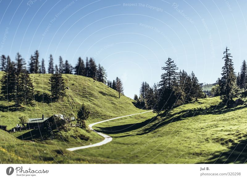 Bavaria Mountain Nature Landscape Air Sky Sun Beautiful weather Warmth Tree Grass Alps Moody Adventure Power Life Colour photo Exterior shot Day